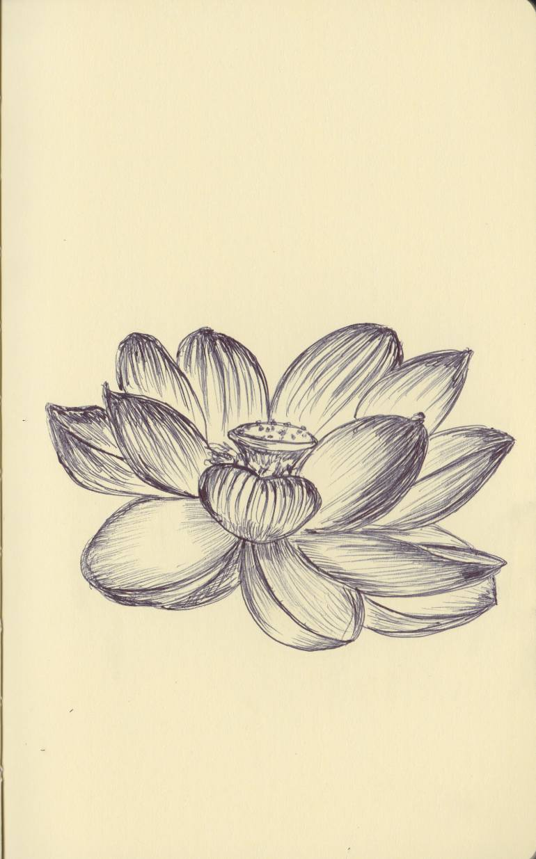 770x1235 Saatchi Art Ballpen Lotus Flower Drawing By Ballpointpen Illustrator