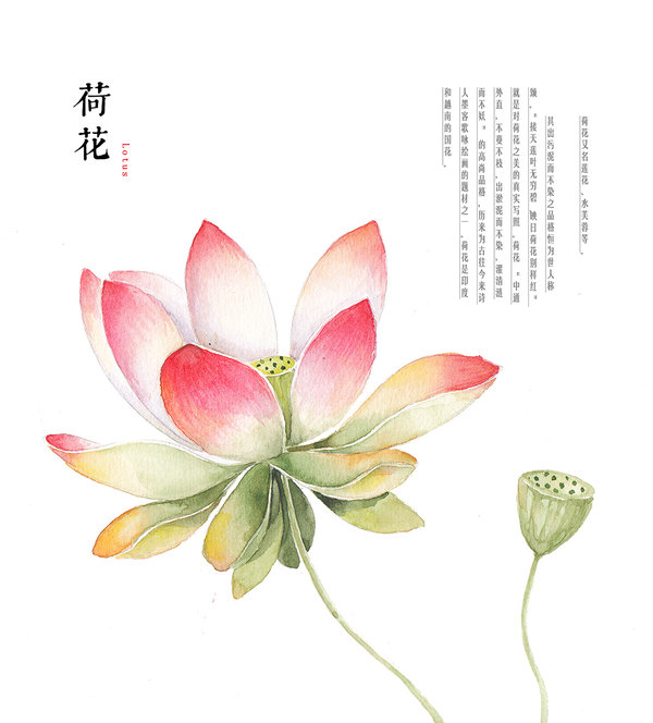 600x664 Hand Drawing Watercolor Plants Lotus By Galoshining