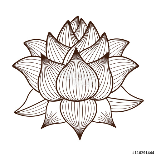 500x500 Lotus Flower Drawing Isolated Icon Design, Vector Illustration