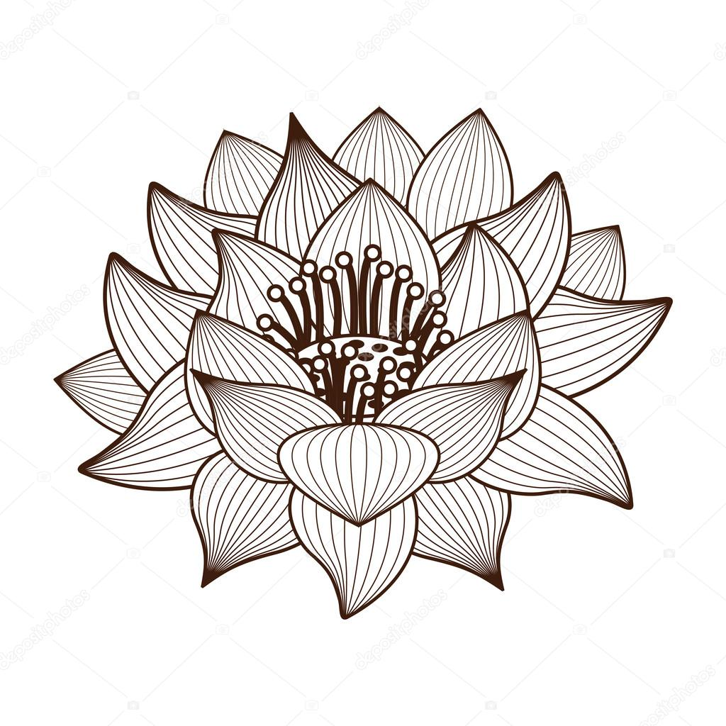1024x1024 Lotus Flower Drawing Isolated Icon Design Stock Vector