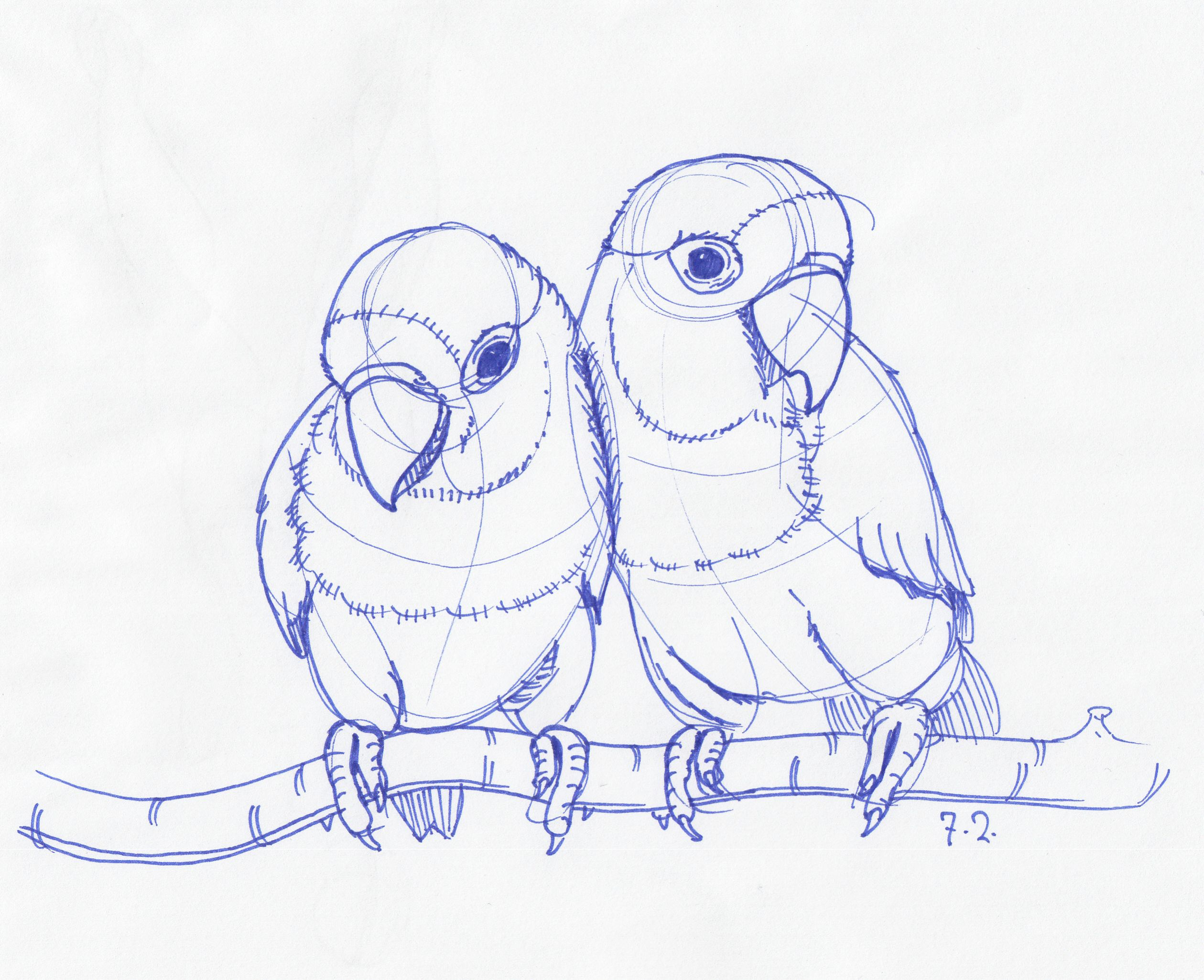 2519x2051 How To Draw Love Birds Love Animals Drawing