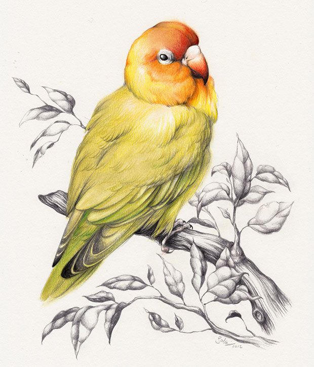 620x724 40 Beautiful Bird Drawings And Art Works For Your Inspiration