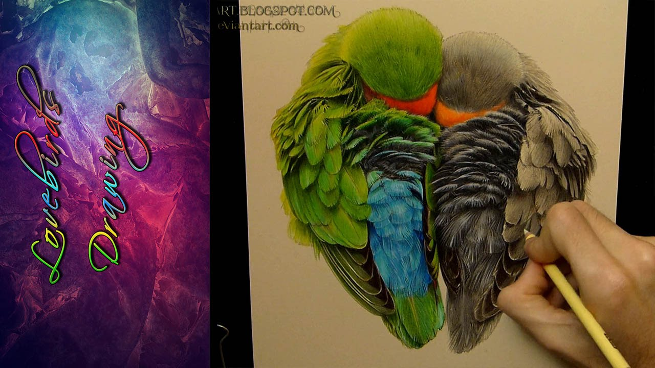 1280x720 How To Draw Love Birds Love Animals Drawing Drawing Of Sketchhow