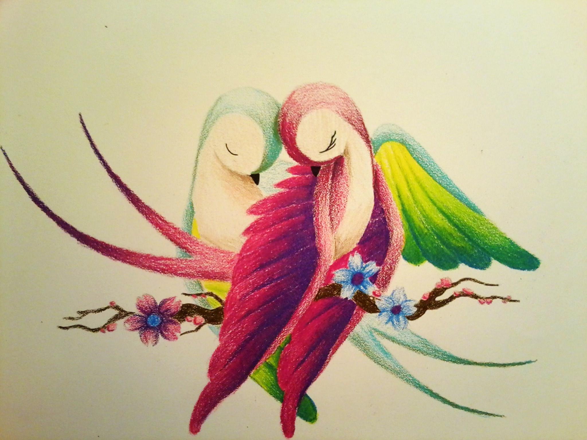 2048x1536 Simple Colour Pencil Sketch Of Birds Love Birds Drawing Simple
