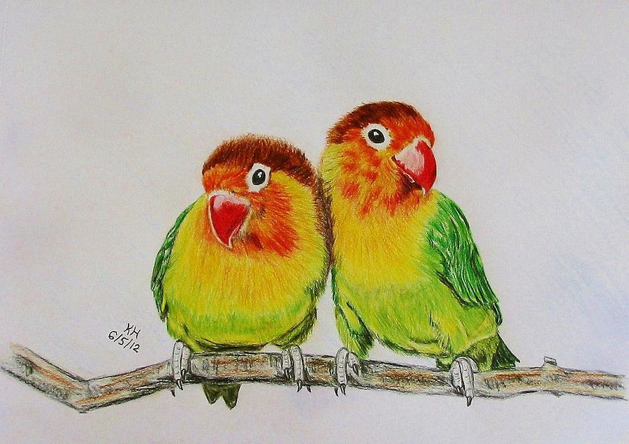 900x636 Fischer's Lovebirds Drawing By Kevin Hubbard