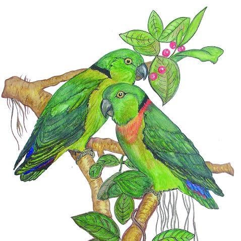 478x478 African Love Bird Society