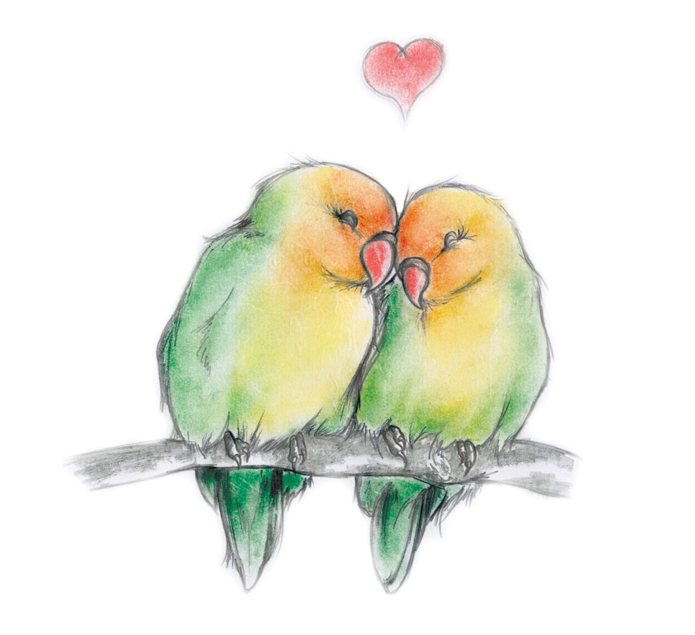 Love Birds Drawing Images at GetDrawings.com | Free for personal use ...
