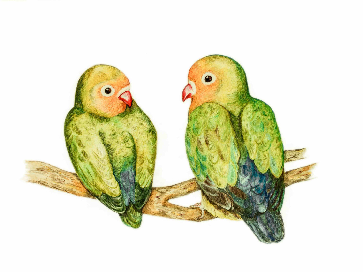 Lovebirds Drawing at GetDrawings.com | Free for personal use ...