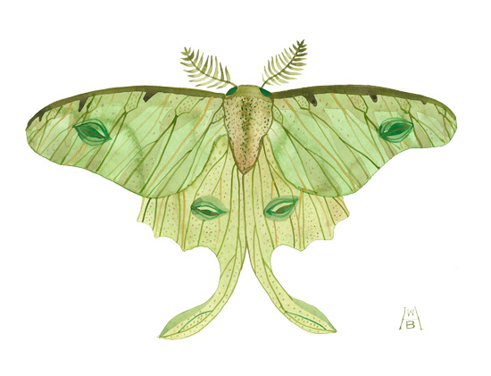 550x421 Golly Bard's Drawing Room Luna Moth