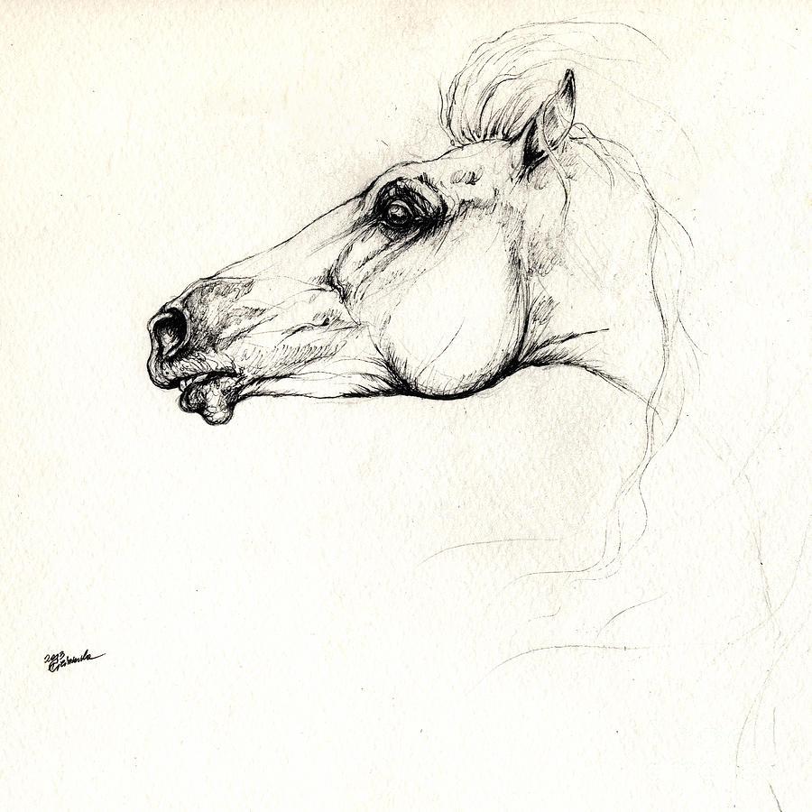 900x900 Mad Andalusian Horse Drawing 05 11 2013 Drawing By Angel Ciesniarska