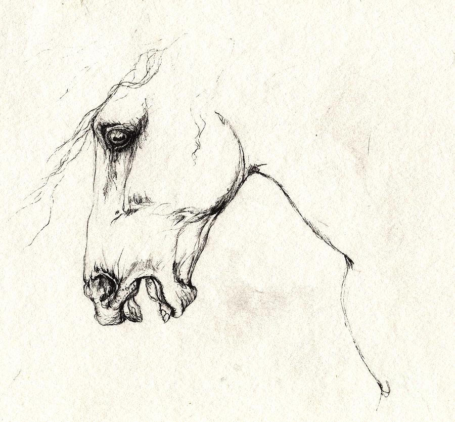 900x834 Mad Horse Drawing By Angel Ciesniarska