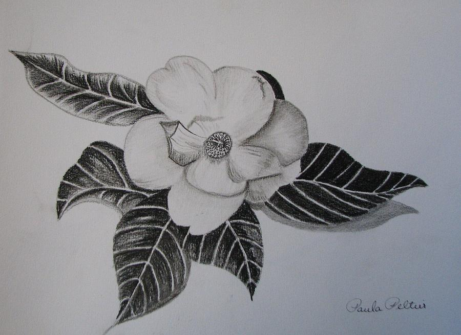900x655 Charcoal Magnolia I Drawing By Paula Peltier