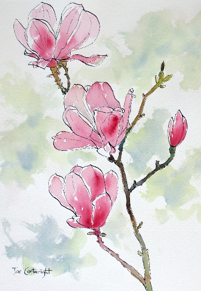 416x600 Drawing Pink Magnolia Flowers Pen And Ink Plus Watercolor Wash