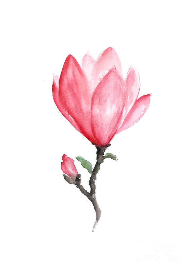 Magnolia Flower Line Drawing : Magnolia drawing at getdrawings free for personal