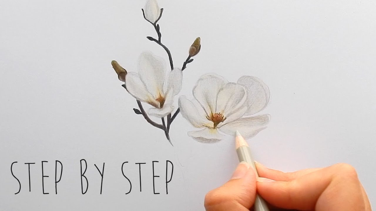1280x720 Step By Step How To Draw, Color A White Magnolia Flower