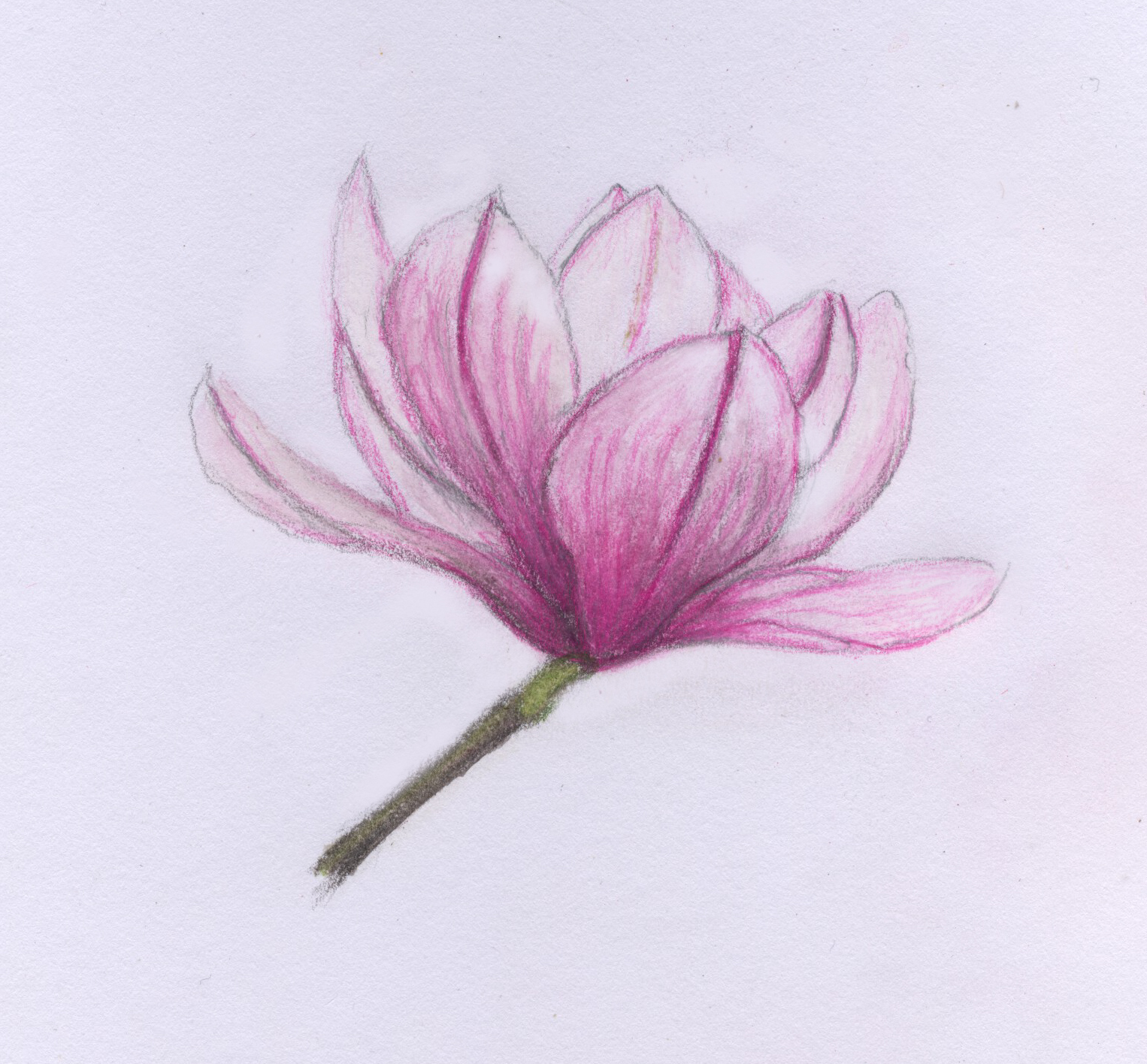 1526x1416 Drawing On The Natural World Spring Awakening