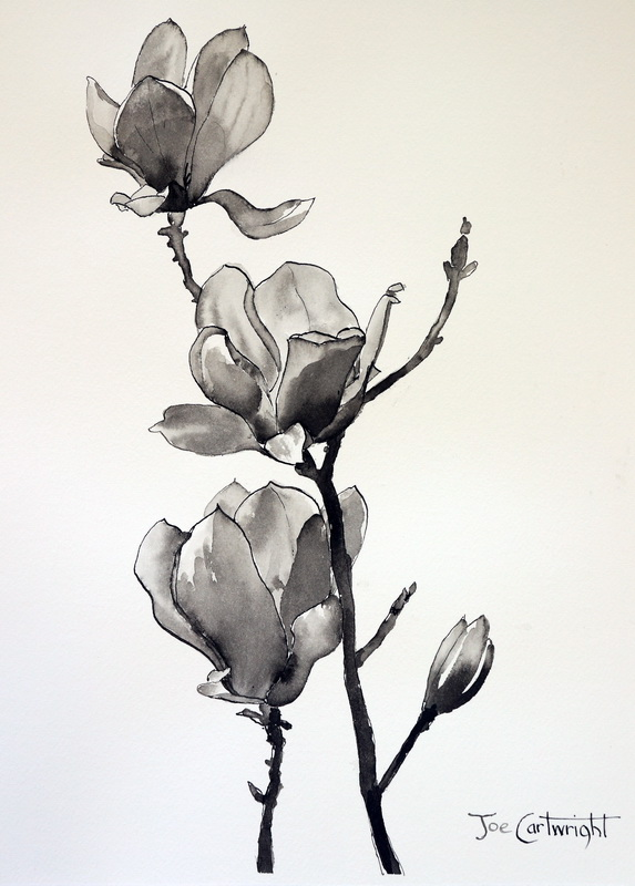 573x800 Pen And Ink Wash Drawings Magnolias Pen And Ink Technique