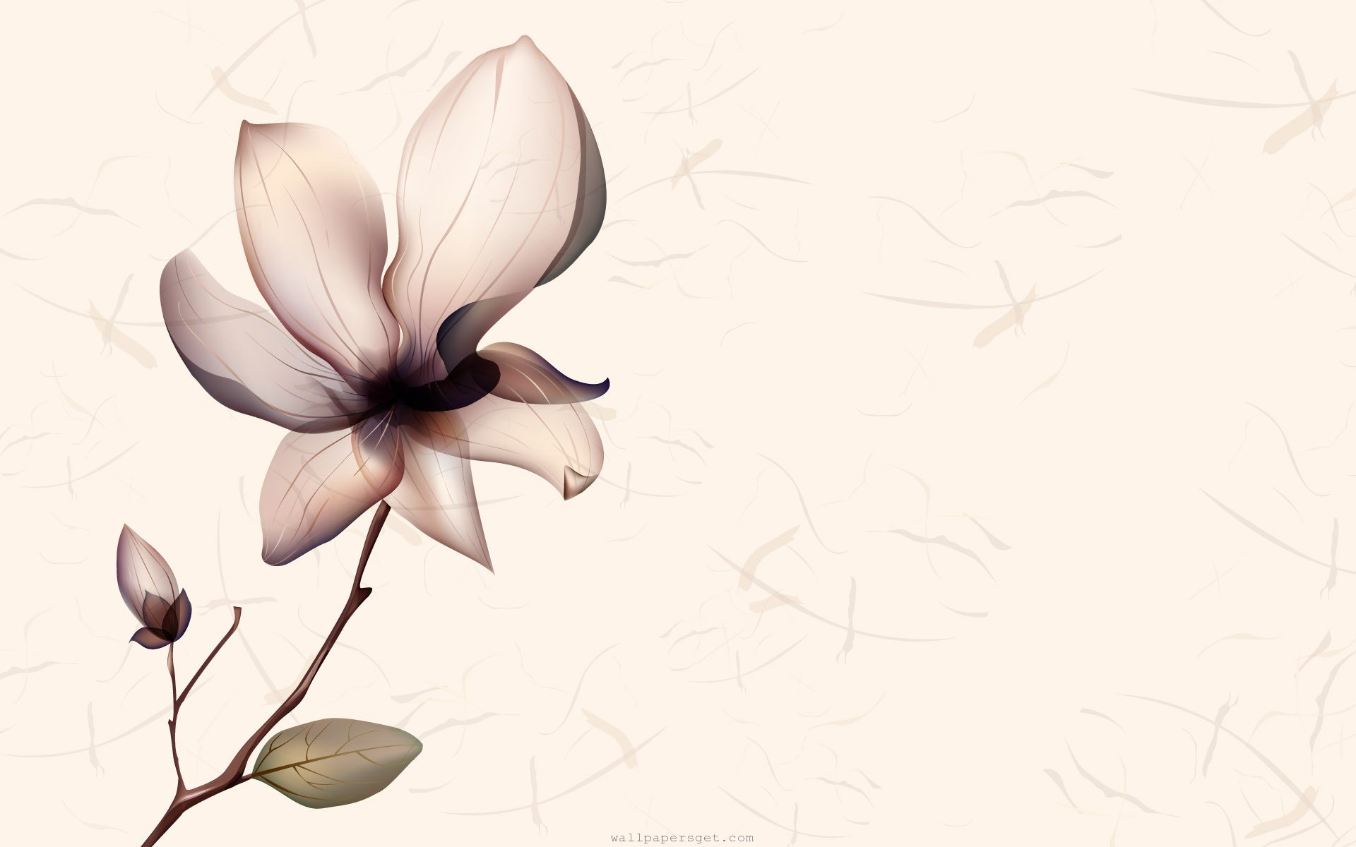 1920x1200 Magnolia Flower Drawing
