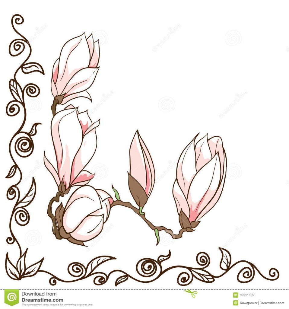 958x1024 Magnolia Flower Drawing Vector Hand Drawn Magnolia Flowers Corner