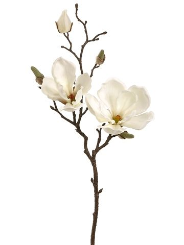 360x480 Magnolia Flowers For My Bouquet. Flowers Magnolia