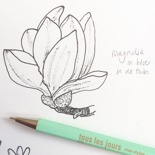 512x512 Pen Drawing Of A Magnolia Flower, Drawing This One For A Poster