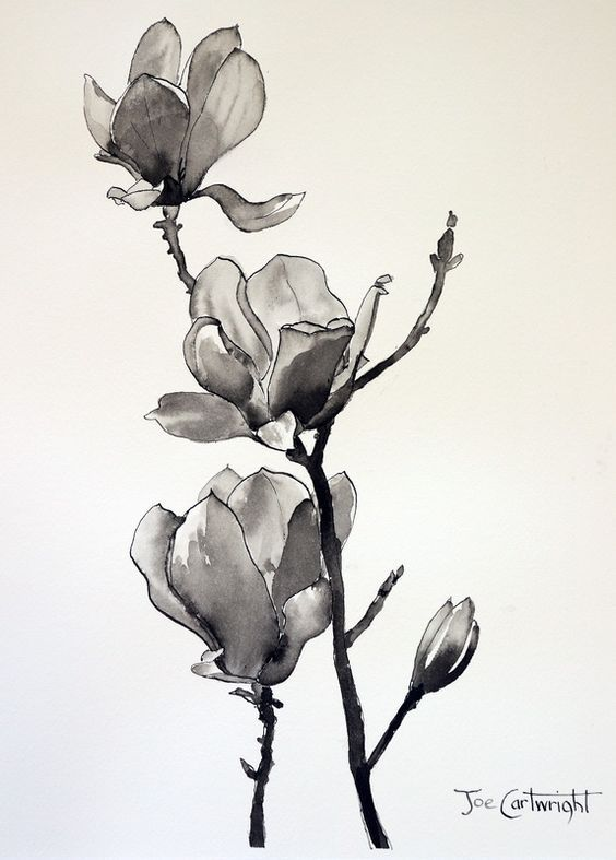 564x787 Pin By Silka On Magnolia I