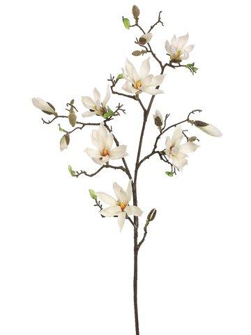 360x480 Cheap Silk Magnolia Tree, Find Silk Magnolia Tree Deals On Line