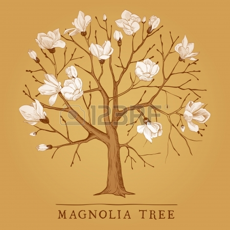 450x450 Magnolia Tree Stock Photos. Royalty Free Business Images