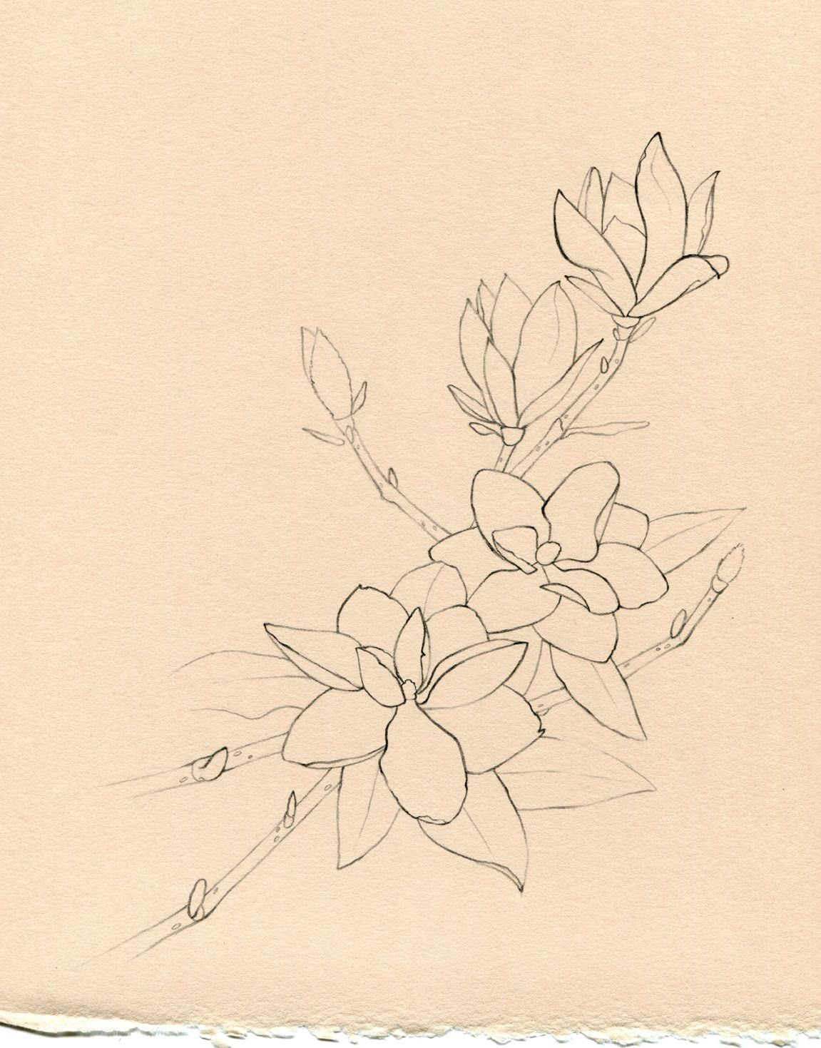 1151x1469 Magnolia Tree Tattoo Pin Magnolia Tree Tattoo Meaning
