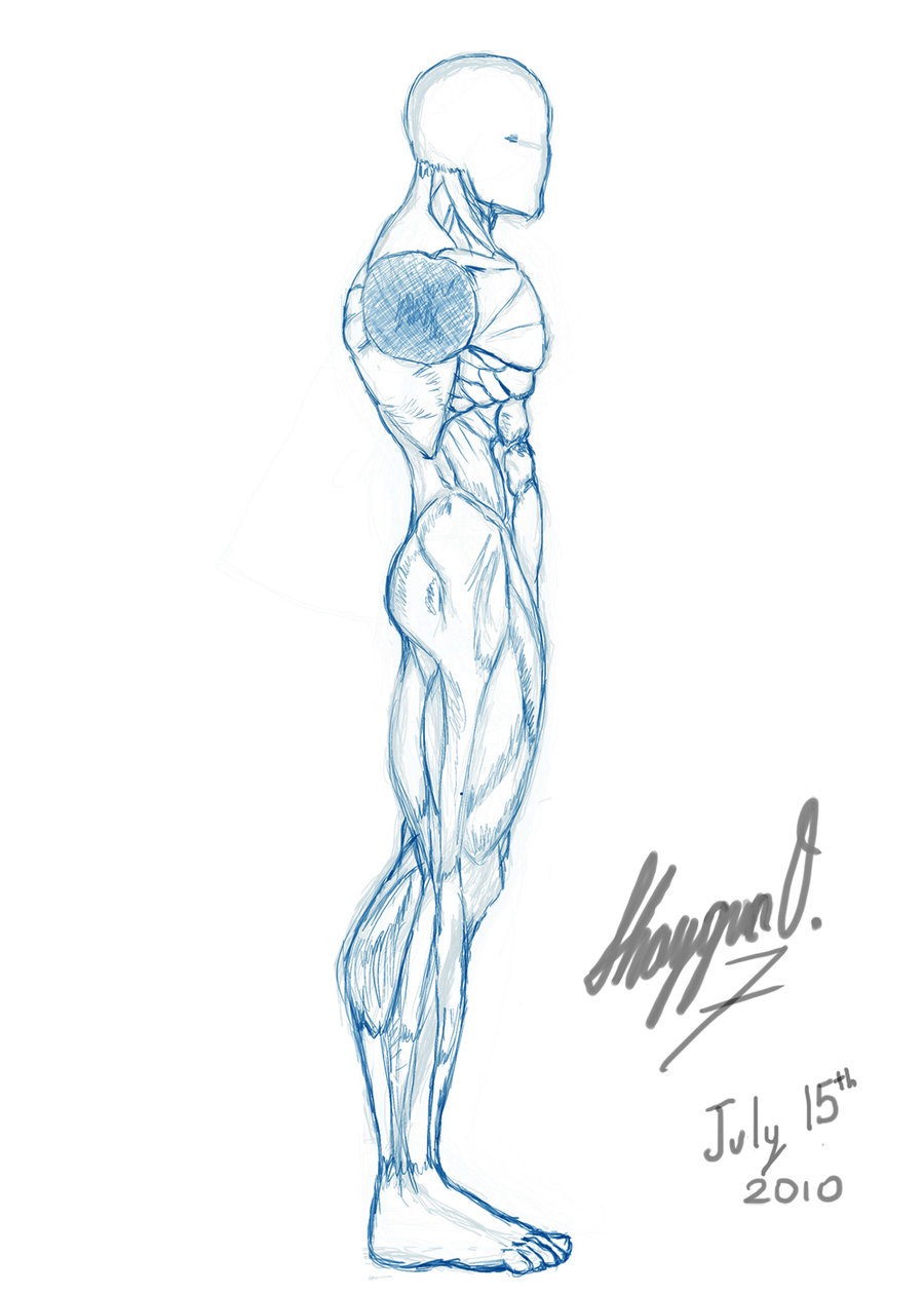 900x1260 Base Like References, Male On Drawingbases