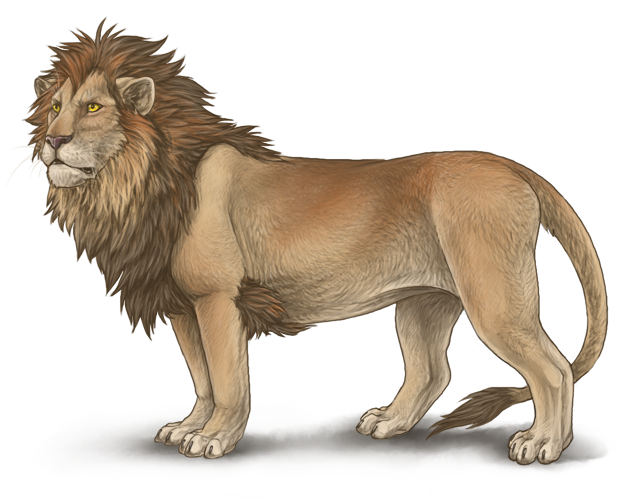 Male Lion Drawing At Getdrawingscom Free For Personal Use
