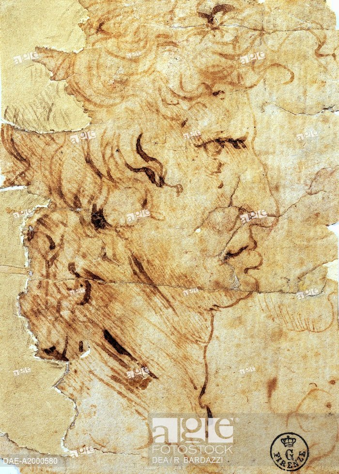 700x979 Male Profile, By Leonardo Da Vinci (1452 1519), Drawing 449e Recto
