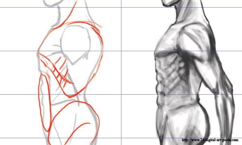 500x300 Male Torso Drawing Skeches Male Torso, Artist