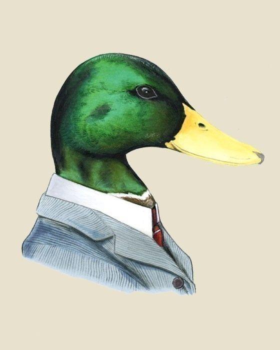 560x700 Mallard Duck Art Print 8x10 Mallard, Duck Art And Illustrations