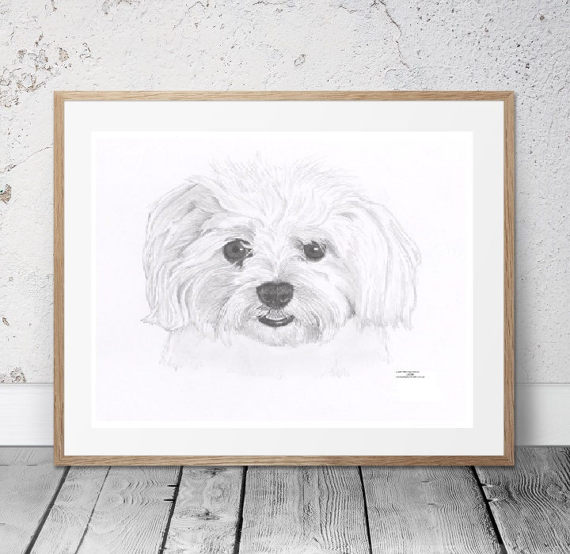 570x554 Maltese Dog Limited Edition Art Drawing Print Signed By Uk