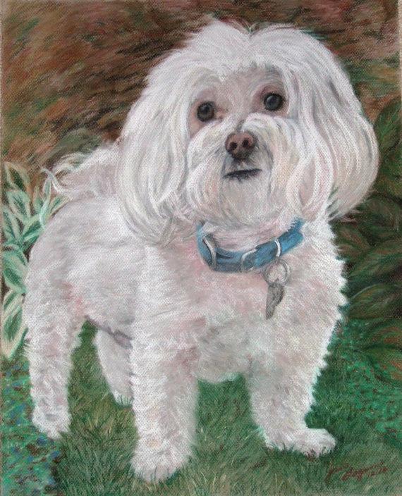570x704 Maltese Custom Dog Portrait Custom Pet Portrait