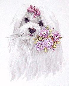 233x289 Maltese Puppy Drawing Cute Maltese Dog Maltese Puppies