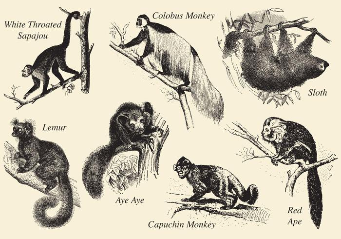 700x490 Old Style Drawing Mammals
