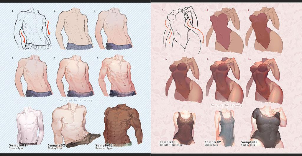 1024x529 Male Vs Female Body By Kawacy