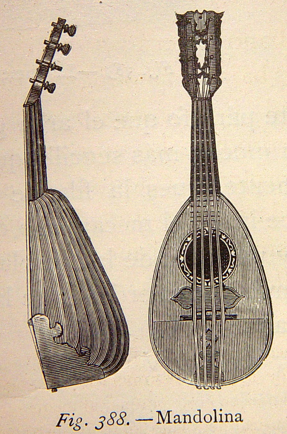 924x1396 Cool Mandolin Drawing! Mandolin, Instruments And Music Instruments