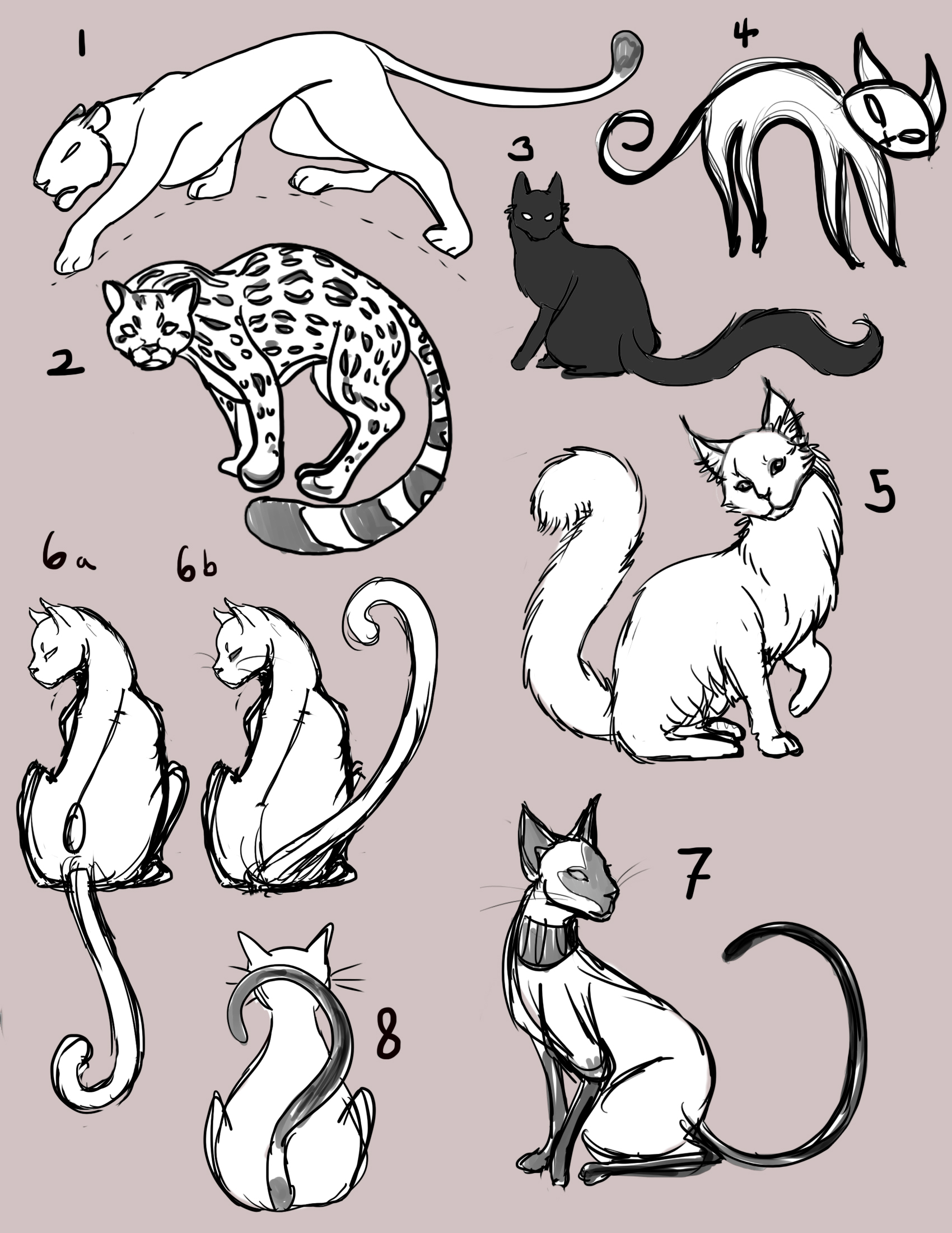 1700x2200 Manga Cats How To Draw Favourites By Mypatronusisacat