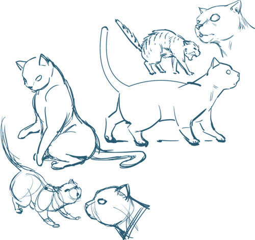500x469 Pin By 1 609 422 7414 On Draw Cats Cat Drawing
