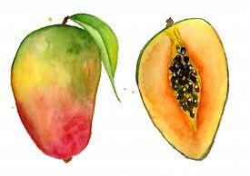 275x194 Mango Drawing Images