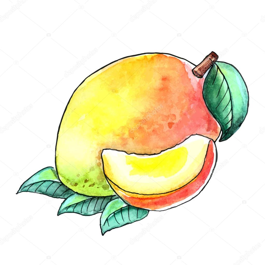 1024x1024 Drawing Watercolor Fruit Mango With Leaves On A White Background