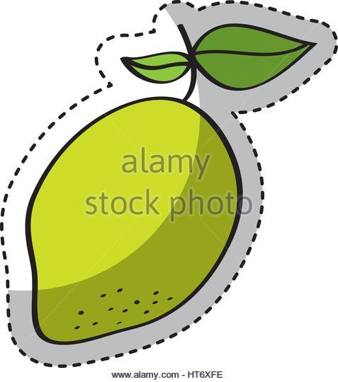 477x540 Mango Fresh Fruit Drawing Icon Stock Photos Amp Mango Fresh Fruit