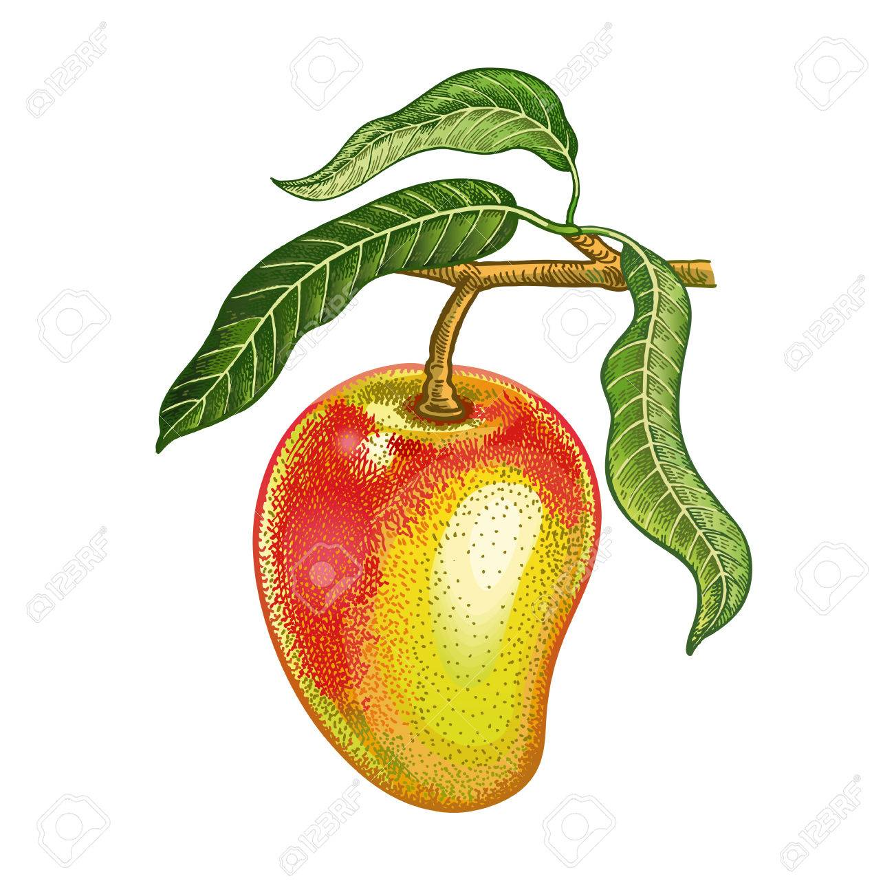 how to draw a mango real easy