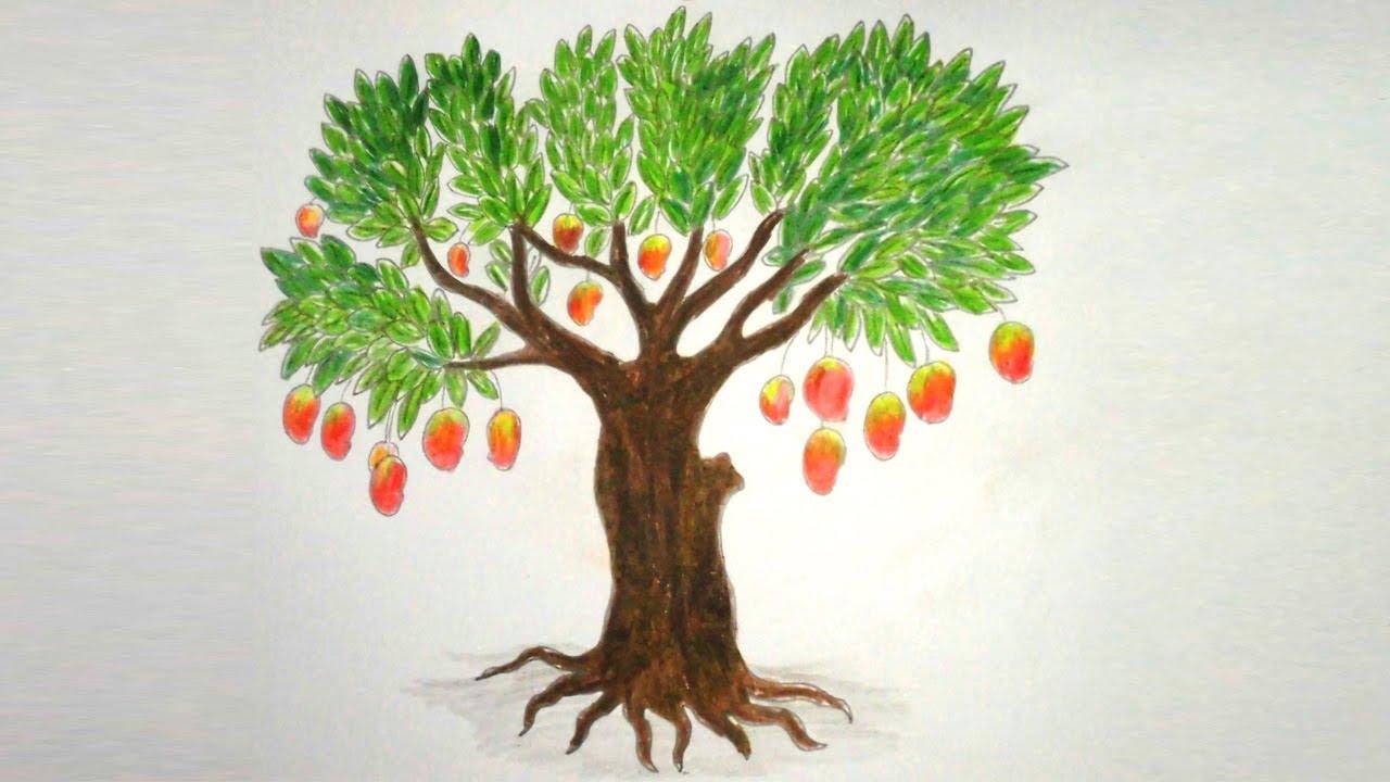 Mango Tree Drawing at GetDrawings.com | Free for personal use Mango ...