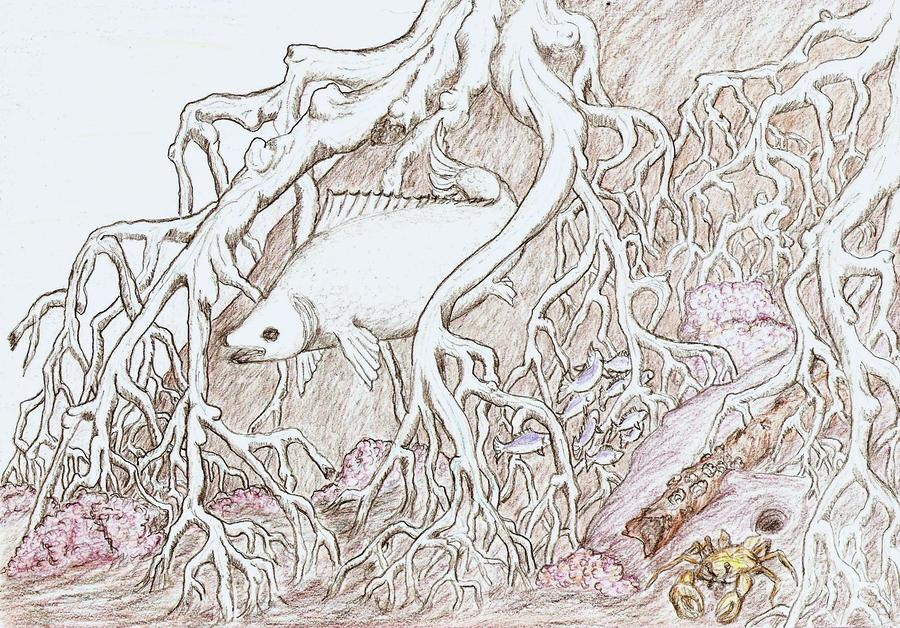 900x628 In Mangrove Roots Drawing By Desley Brkic
