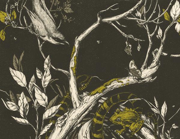 600x463 The Mangrove Tree On Behance