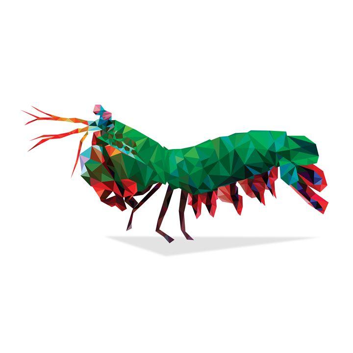 720x720 Geometric Abstract Mantis Shrimp